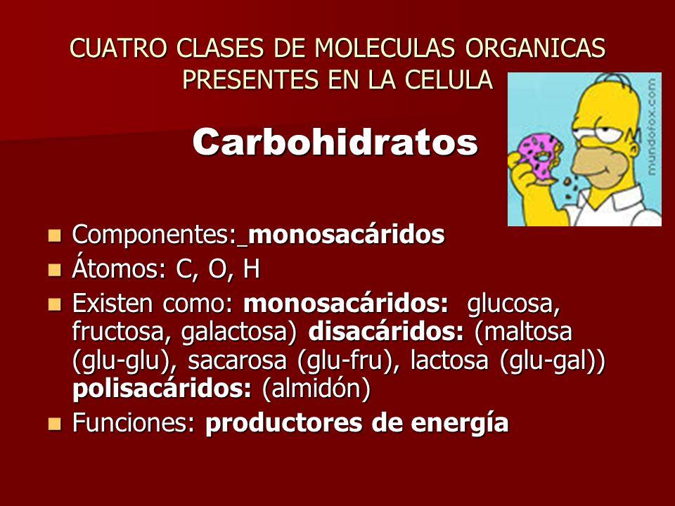 CUATRO CLASES DE MOLECULAS ORGANICAS PRESENTES EN LA CELULA Carbohidratos Componentes: monosacáridos Componentes: monosacáridos Átomos: C, O, H Átomos