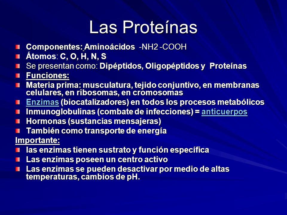 Las Proteínas Componentes: Aminoácidos -NH2 -COOH, O, H, N, S Átomos: C, O, H, N, S Se presentan como: Dipéptidos, Oligopéptidos y Proteínas Funciones