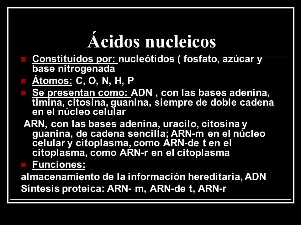 Ácidos nucleicos Constituidos por: nucleótidos ( fosfato, azúcar y base nitrogenada Átomos: C, O, N, H, P Se presentan como: ADN, con las bases adenin