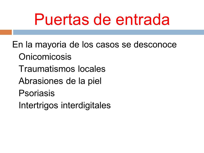 Puertas de entrada En la mayoria de los casos se desconoce Onicomicosis Traumatismos locales Abrasiones de la piel Psoriasis Intertrigos interdigitale