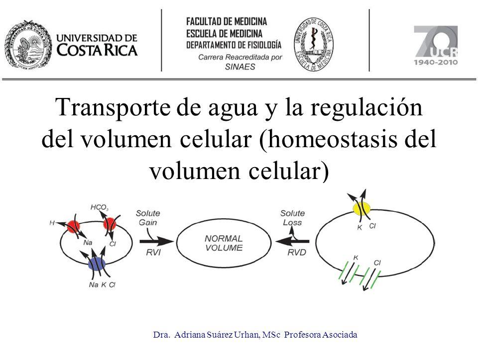 Transporte de agua y la regulación del volumen celular (homeostasis del volumen celular) Dra. Adriana Suárez Urhan, MSc Profesora Asociada