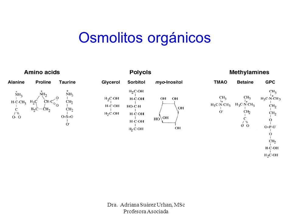 Osmolitos orgánicos Dra. Adriana Suárez Urhan, MSc Profesora Asociada