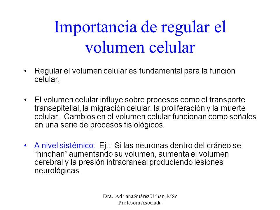 Importancia de regular el volumen celular Regular el volumen celular es fundamental para la función celular. El volumen celular influye sobre procesos