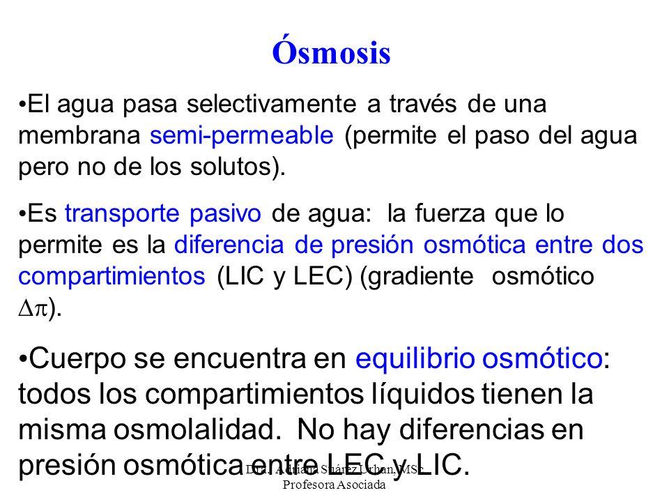 Ósmosis El agua pasa selectivamente a través de una membrana semi-permeable (permite el paso del agua pero no de los solutos). Es transporte pasivo de