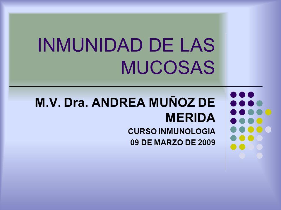 INMUNIDAD DE LAS MUCOSAS M.V. Dra. ANDREA MUÑOZ DE MERIDA CURSO INMUNOLOGIA 09 DE MARZO DE 2009