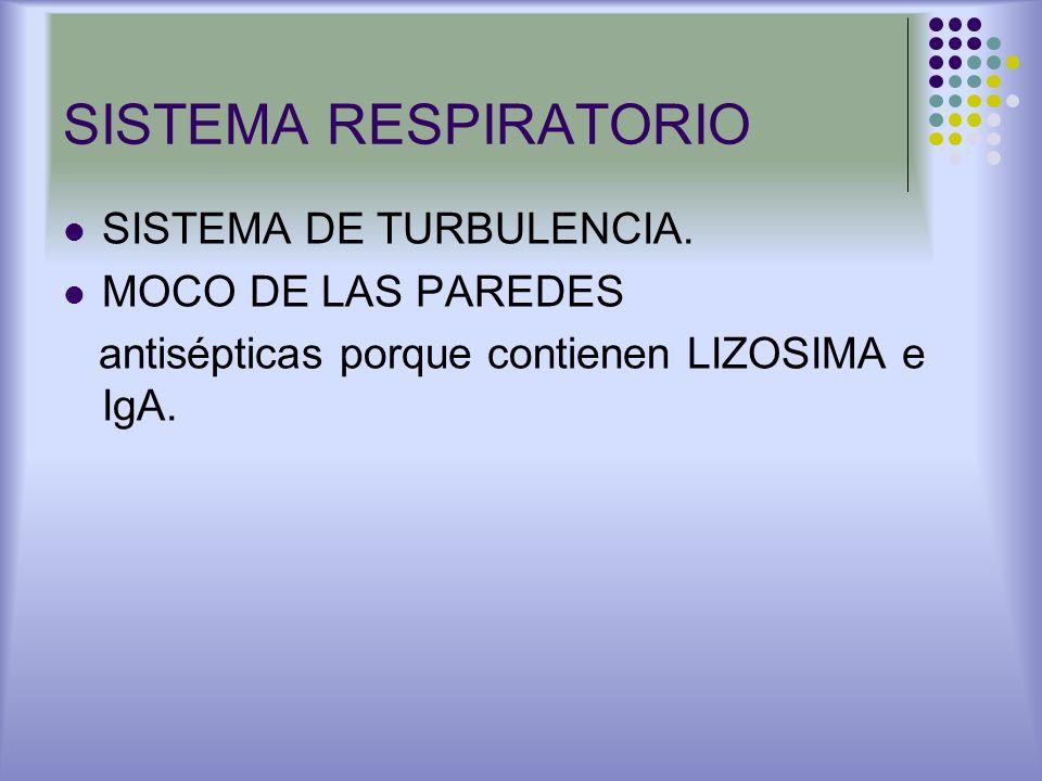 SISTEMA RESPIRATORIO SISTEMA DE TURBULENCIA. MOCO DE LAS PAREDES antisépticas porque contienen LIZOSIMA e IgA.