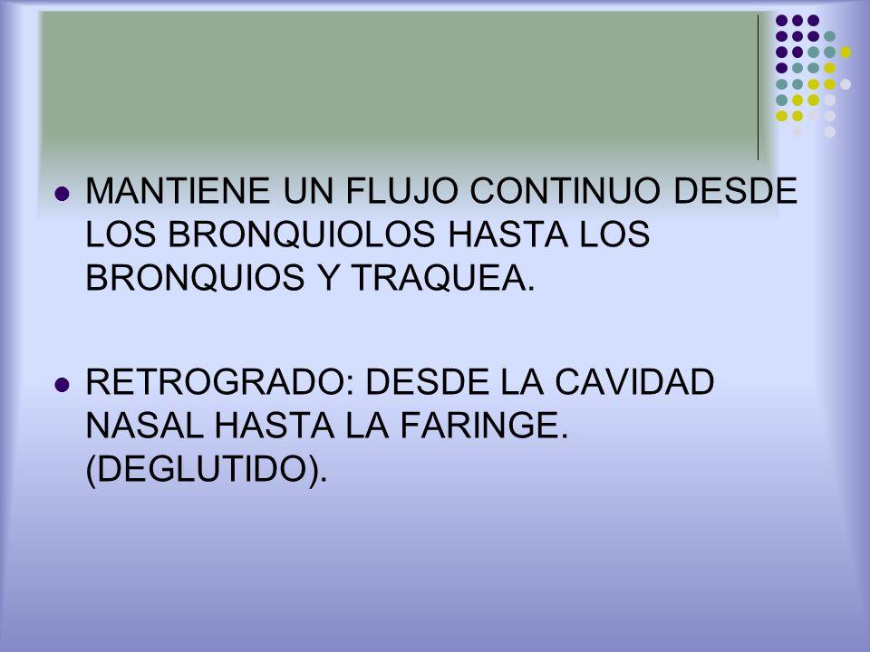MANTIENE UN FLUJO CONTINUO DESDE LOS BRONQUIOLOS HASTA LOS BRONQUIOS Y TRAQUEA. RETROGRADO: DESDE LA CAVIDAD NASAL HASTA LA FARINGE. (DEGLUTIDO).