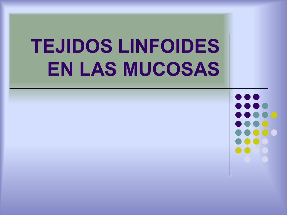 TEJIDOS LINFOIDES EN LAS MUCOSAS