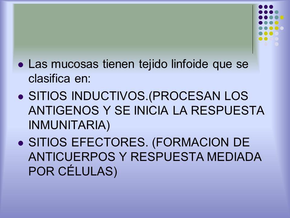 Las mucosas tienen tejido linfoide que se clasifica en: SITIOS INDUCTIVOS.(PROCESAN LOS ANTIGENOS Y SE INICIA LA RESPUESTA INMUNITARIA) SITIOS EFECTOR