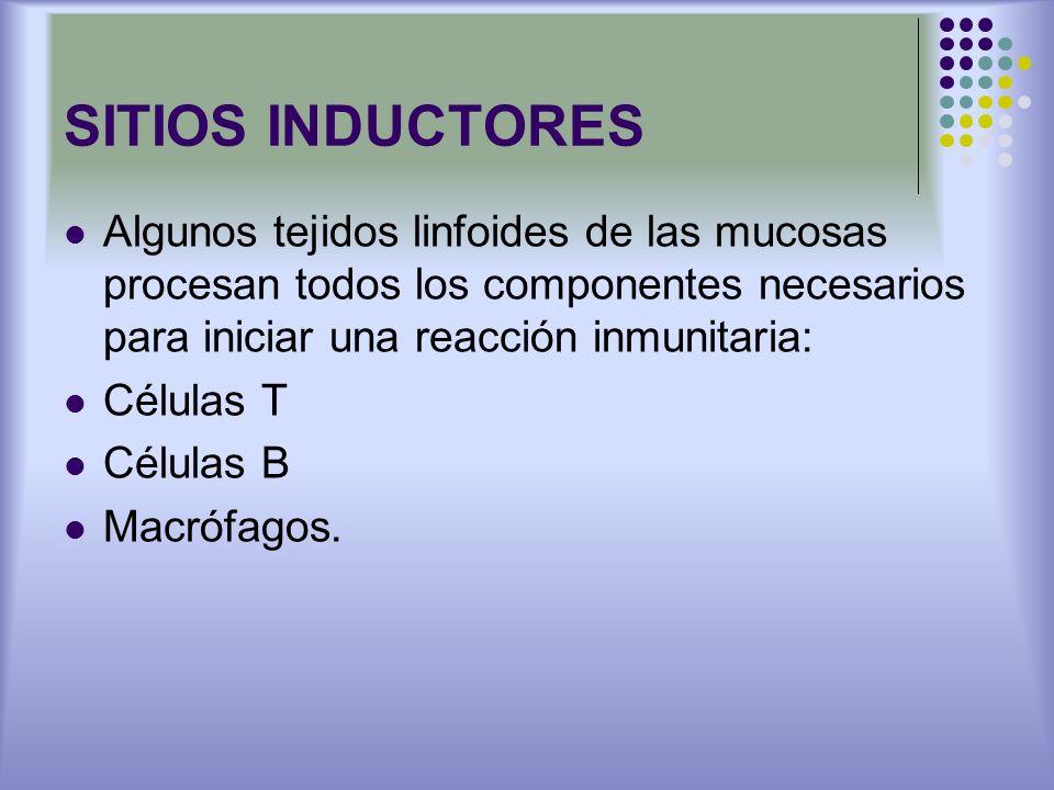 SITIOS INDUCTORES Algunos tejidos linfoides de las mucosas procesan todos los componentes necesarios para iniciar una reacción inmunitaria: Células T