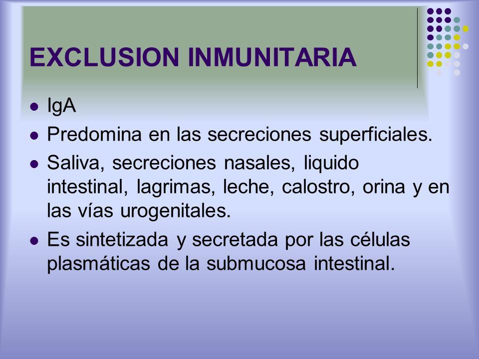 EXCLUSION INMUNITARIA IgA Predomina en las secreciones superficiales. Saliva, secreciones nasales, liquido intestinal, lagrimas, leche, calostro, orin