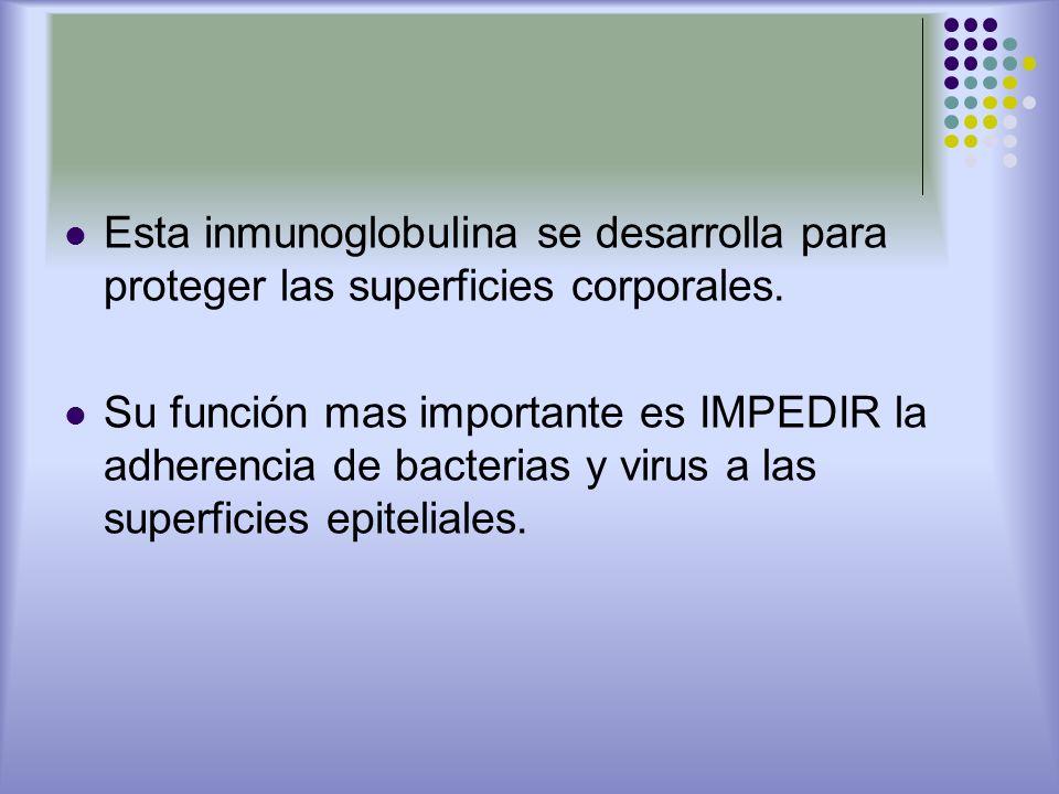 Esta inmunoglobulina se desarrolla para proteger las superficies corporales. Su función mas importante es IMPEDIR la adherencia de bacterias y virus a