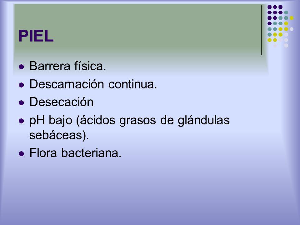 PIEL Barrera física. Descamación continua. Desecación pH bajo (ácidos grasos de glándulas sebáceas). Flora bacteriana.