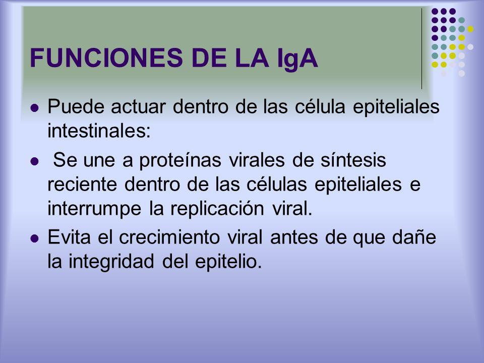 FUNCIONES DE LA IgA Puede actuar dentro de las célula epiteliales intestinales: Se une a proteínas virales de síntesis reciente dentro de las células