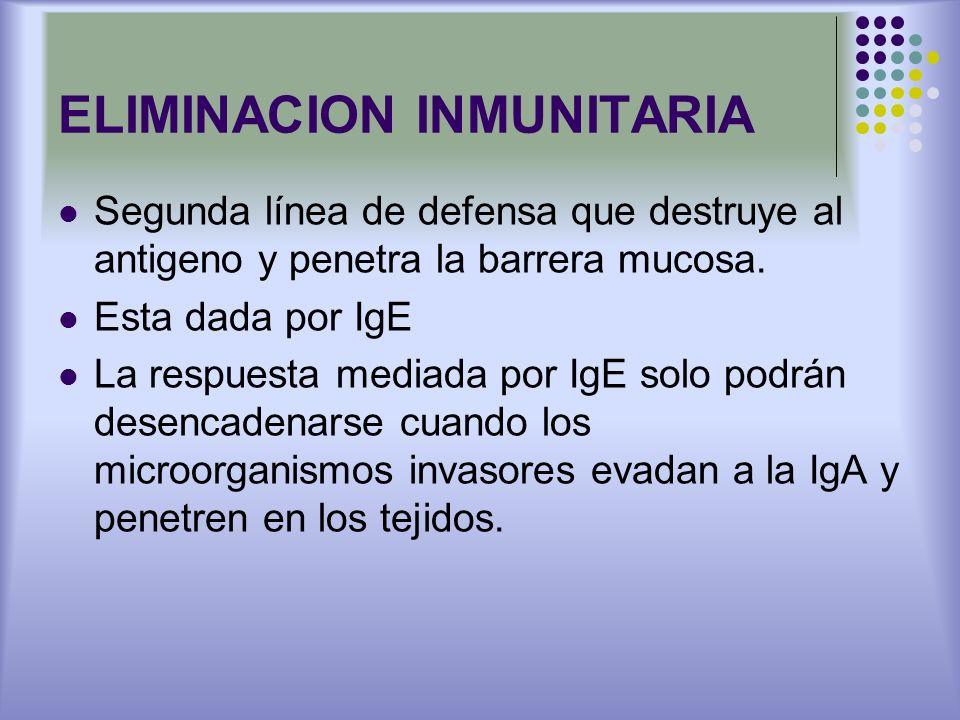 ELIMINACION INMUNITARIA Segunda línea de defensa que destruye al antigeno y penetra la barrera mucosa. Esta dada por IgE La respuesta mediada por IgE