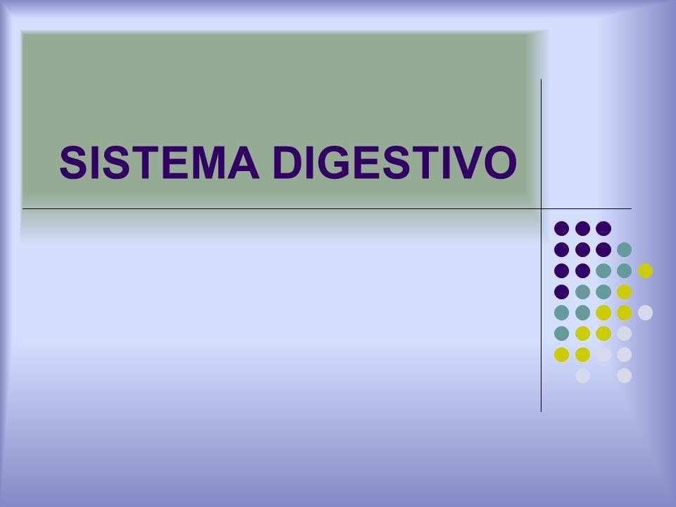IMPORTANCIA DE LA FLORA DEL APARATO DIGESTIVO: CONTROL DE PATOGENOS: En los intestinos la flora bacteriana provee un ambiente anaerobio y un pH bajo.