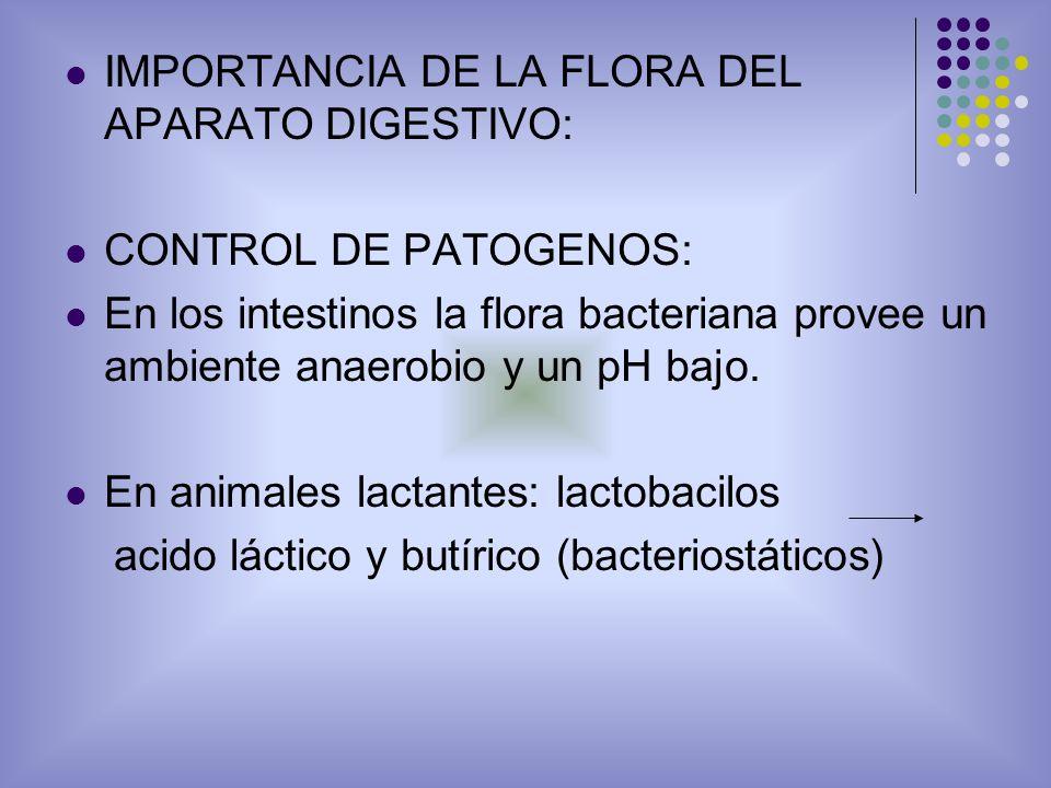 LIZOSIMA Se sintetiza en la mucosa gástrica y en macrófagos de la mucosa intestinal.