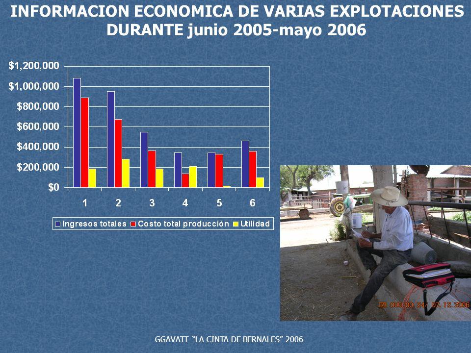 GGAVATT LA CINTA DE BERNALES 2006 INFORMACION ECONOMICA DE VARIAS EXPLOTACIONES DURANTE junio 2005-mayo 2006