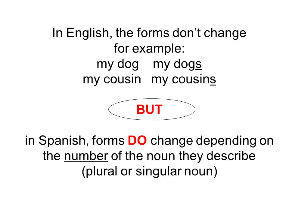 In English, the forms dont change for example: my dog my dogs my cousin my cousins BUT in Spanish, forms DO change depending on the number of the noun