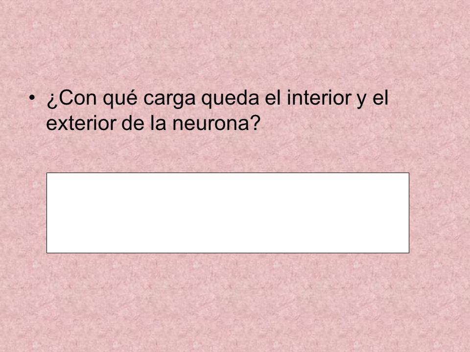 ¿Con qué carga queda el interior y el exterior de la neurona?