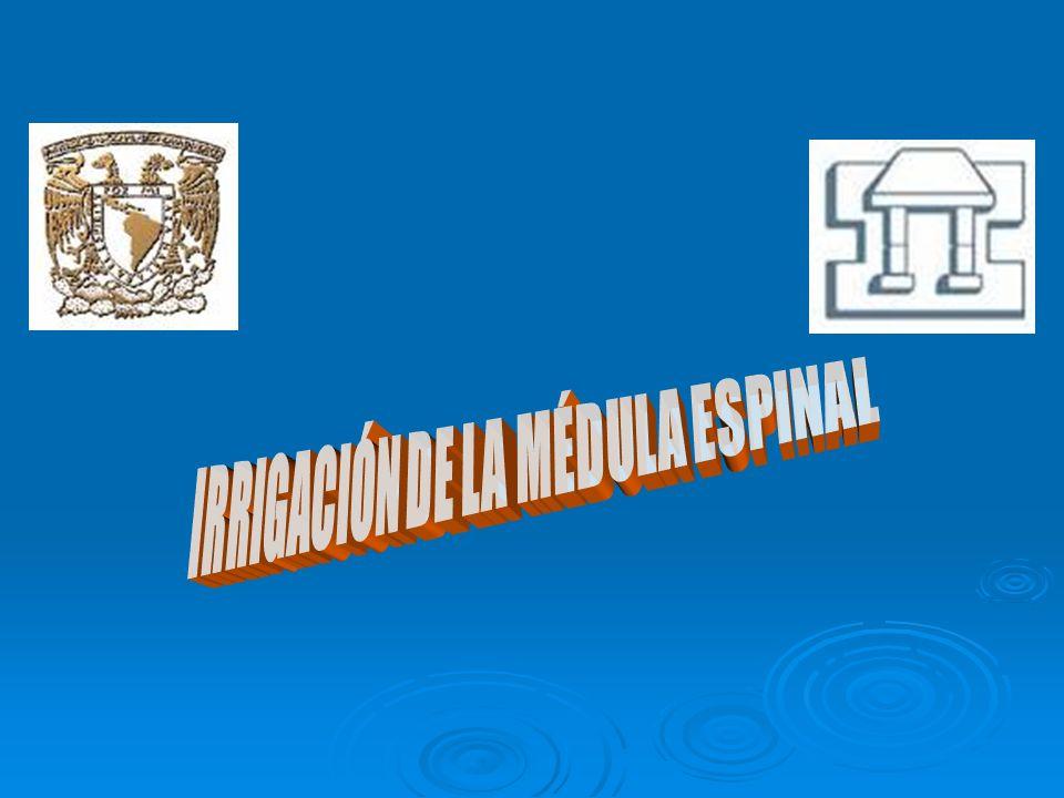 Integrated Medical Curriculum