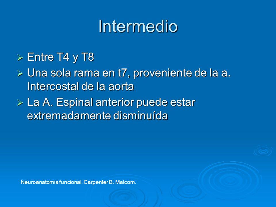 Intermedio Entre T4 y T8 Entre T4 y T8 Una sola rama en t7, proveniente de la a. Intercostal de la aorta Una sola rama en t7, proveniente de la a. Int