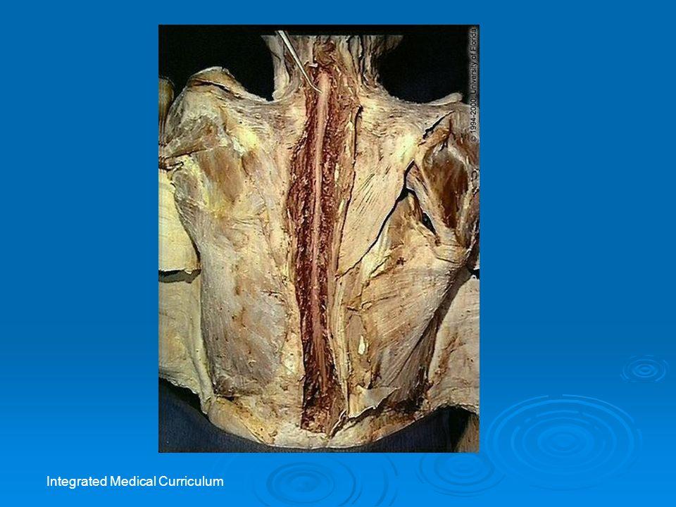 La ME recibe su aporte sanguíneo de: La ME recibe su aporte sanguíneo de: Subclavia Ramas vertebral, cervical ascendente, tiroidea inf.,m cervical profunda e intercostales sup.