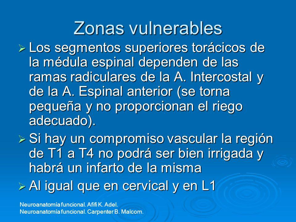 Zonas vulnerables Los segmentos superiores torácicos de la médula espinal dependen de las ramas radiculares de la A. Intercostal y de la A. Espinal an