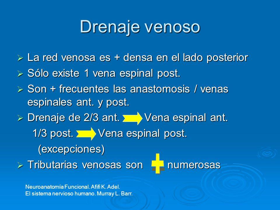 Drenaje venoso La red venosa es + densa en el lado posterior La red venosa es + densa en el lado posterior Sólo existe 1 vena espinal post. Sólo exist
