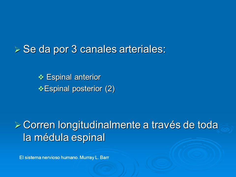Se da por 3 canales arteriales: Se da por 3 canales arteriales: Espinal anterior Espinal anterior Espinal posterior (2) Espinal posterior (2) Corren l