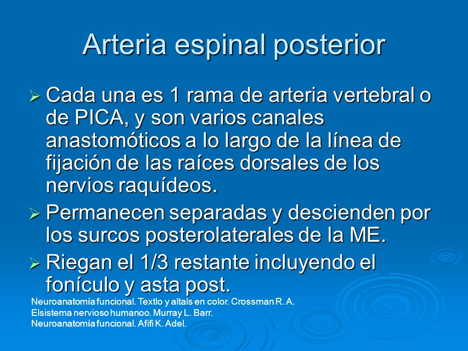 Neuroanatomía funcional. Carpenter B. Malcom