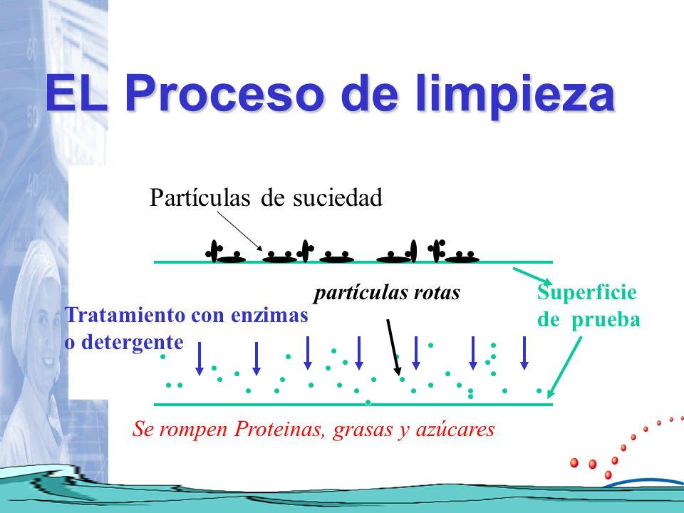 EL Proceso de limpieza Partículas de suciedad Tratamiento con enzimas o detergente Se rompen Proteinas, grasas y azúcares Superficie de prueba partícu