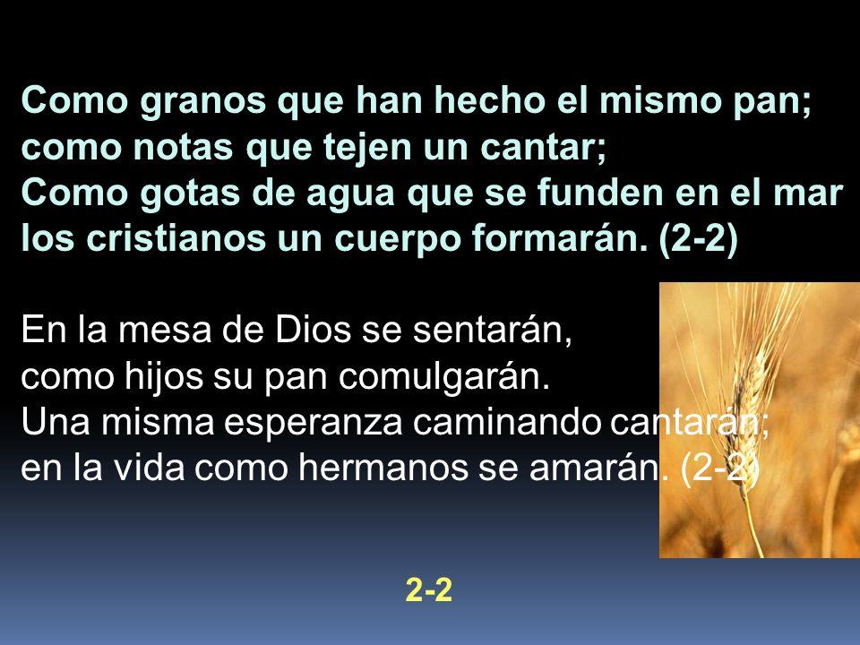 Como granos que han hecho el mismo pan; como notas que tejen un cantar; Como gotas de agua que se funden en el mar los cristianos un cuerpo formarán.