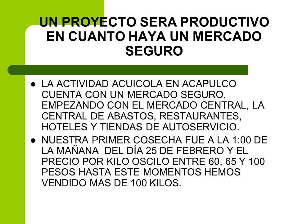 UN PROYECTO SERA PRODUCTIVO EN CUANTO HAYA UN MERCADO SEGURO LA ACTIVIDAD ACUICOLA EN ACAPULCO CUENTA CON UN MERCADO SEGURO, EMPEZANDO CON EL MERCADO
