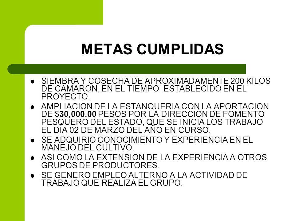 METAS CUMPLIDAS SIEMBRA Y COSECHA DE APROXIMADAMENTE 200 KILOS DE CAMARON, EN EL TIEMPO ESTABLECIDO EN EL PROYECTO. AMPLIACION DE LA ESTANQUERIA CON L