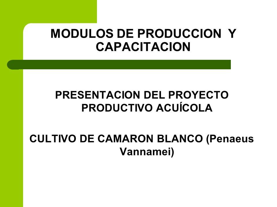 UBICACIÓN: AMPLIACION SAN ISIDRO (PIE DE LA CUESTA) INVERSION: 27,687.