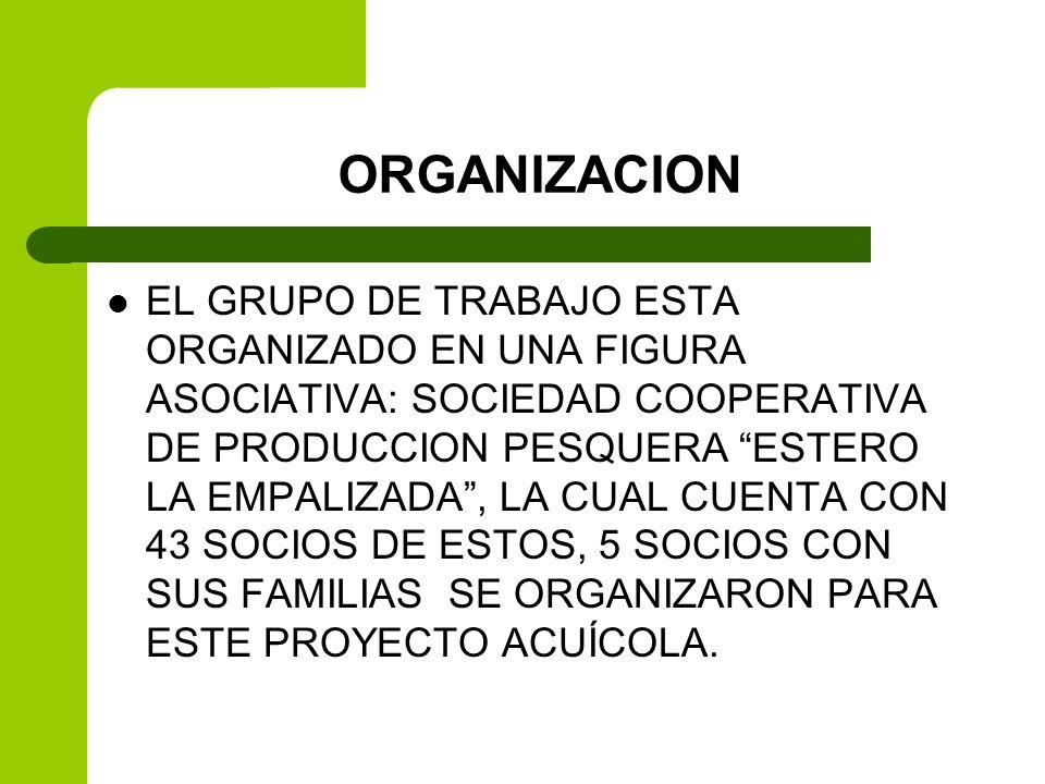 ORGANIZACION EL GRUPO DE TRABAJO ESTA ORGANIZADO EN UNA FIGURA ASOCIATIVA: SOCIEDAD COOPERATIVA DE PRODUCCION PESQUERA ESTERO LA EMPALIZADA, LA CUAL C