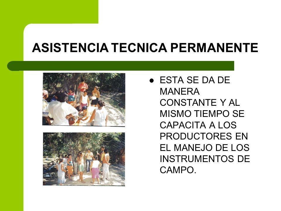 ASISTENCIA TECNICA PERMANENTE ESTA SE DA DE MANERA CONSTANTE Y AL MISMO TIEMPO SE CAPACITA A LOS PRODUCTORES EN EL MANEJO DE LOS INSTRUMENTOS DE CAMPO
