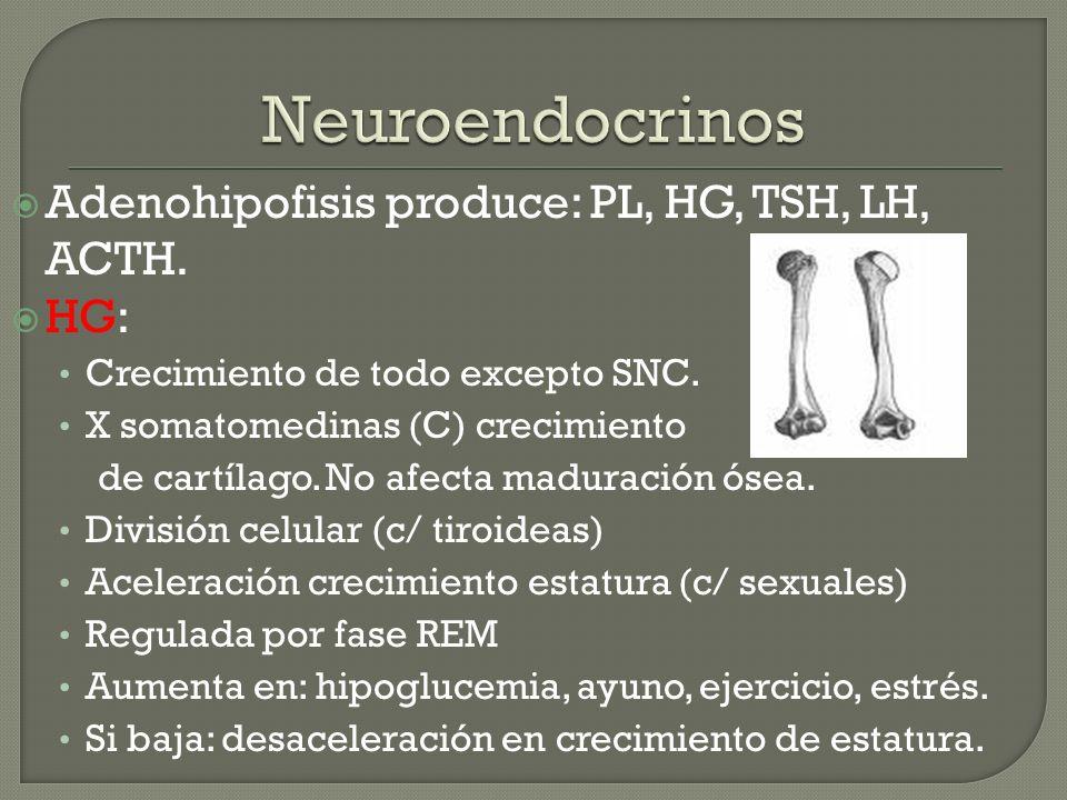 Adenohipofisis produce: PL, HG, TSH, LH, ACTH. HG: Crecimiento de todo excepto SNC. X somatomedinas (C) crecimiento de cartílago. No afecta maduración