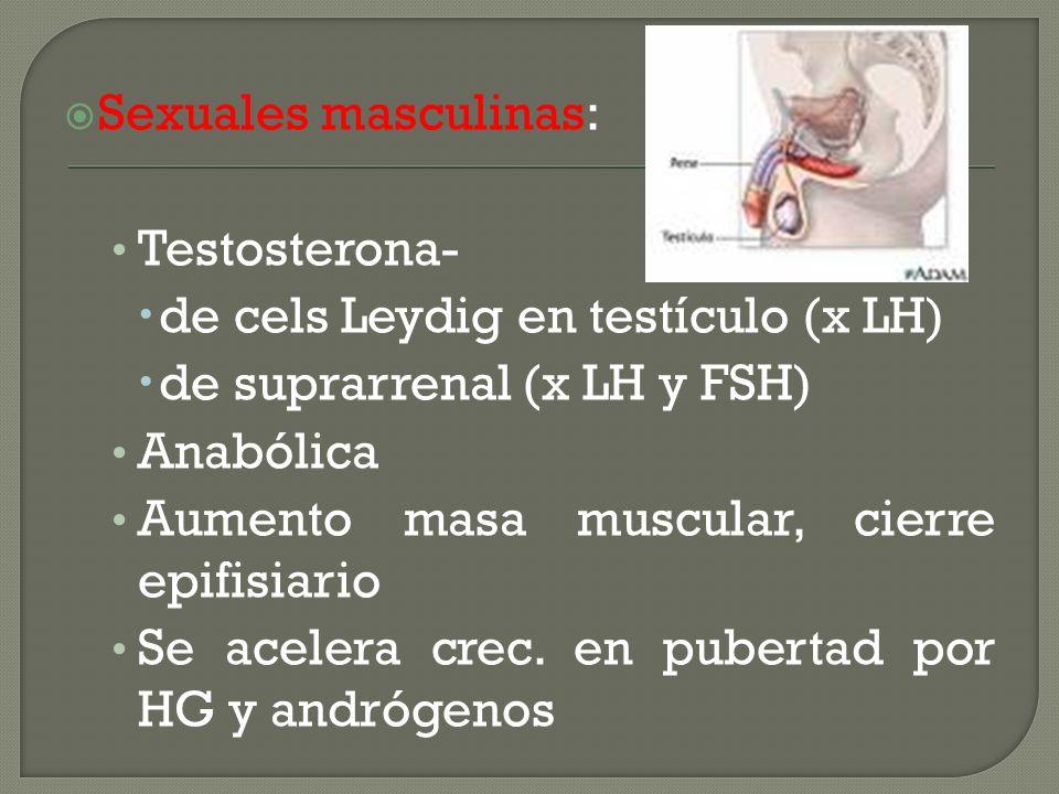 Sexuales masculinas: Testosterona- de cels Leydig en testículo (x LH) de suprarrenal (x LH y FSH) Anabólica Aumento masa muscular, cierre epifisiario