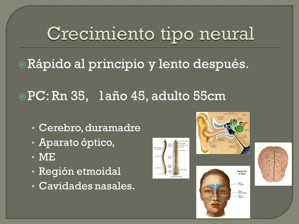 Rápido al principio y lento después. PC: Rn 35, 1año 45, adulto 55cm Cerebro, duramadre Aparato óptico, ME Región etmoidal Cavidades nasales.
