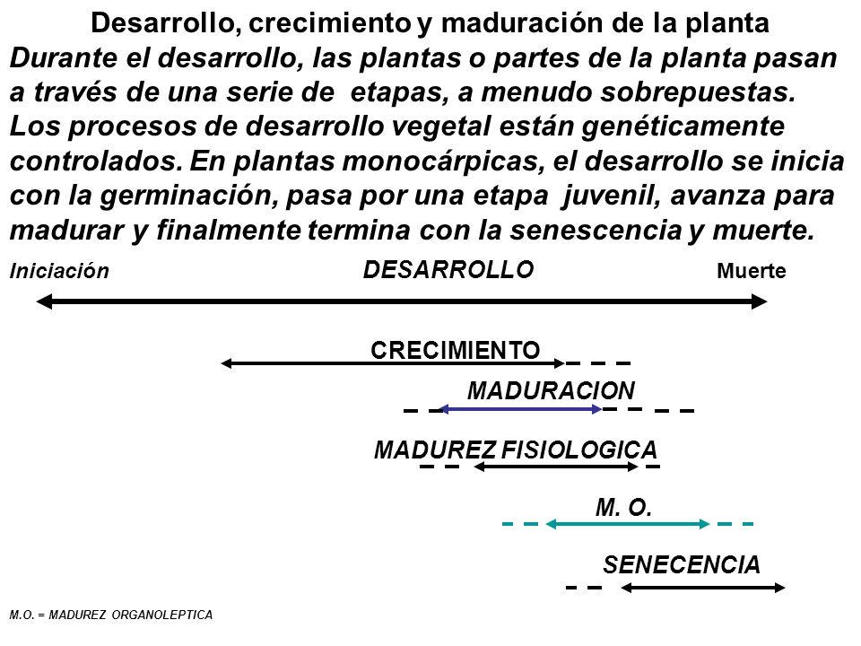 Desarrollo, crecimiento y maduración de la planta Durante el desarrollo, las plantas o partes de la planta pasan a través de una serie de etapas, a me