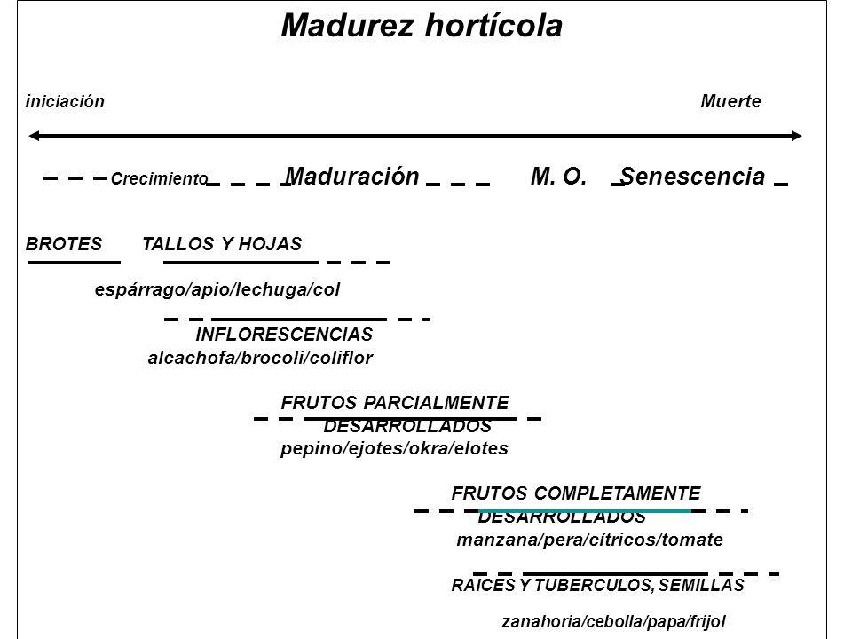Madurez hortícola i niciación Muerte Crecimiento Maduración M. O. Senescencia BROTES TALLOS Y HOJAS espárrago/apio/lechuga/col INFLORESCENCIAS alcacho