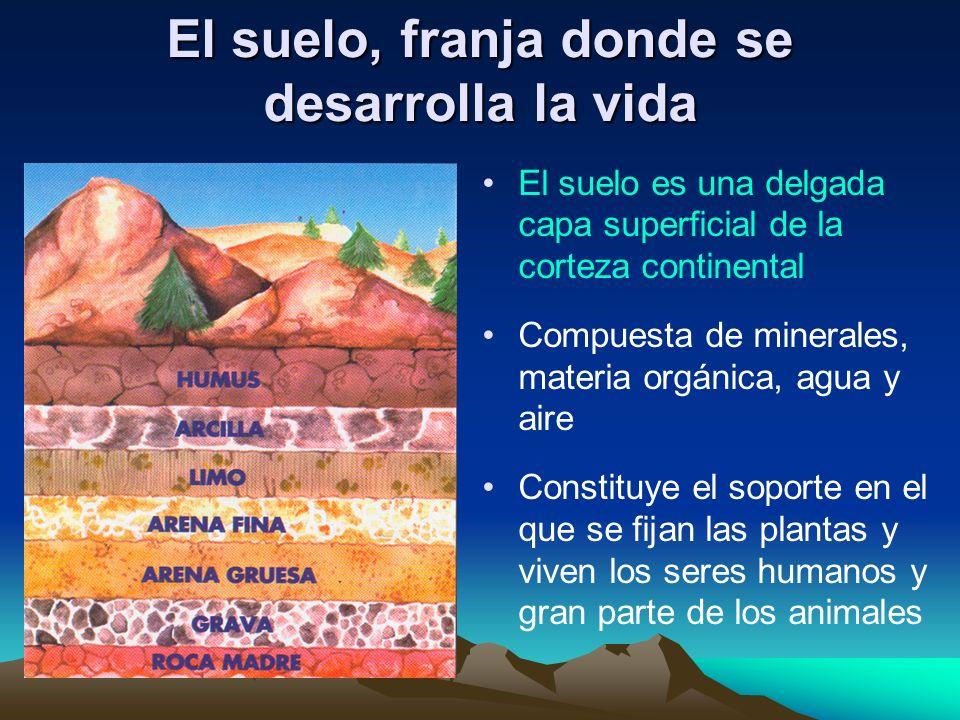El suelo es una delgada capa superficial de la corteza continental Compuesta de minerales, materia orgánica, agua y aire Constituye el soporte en el q