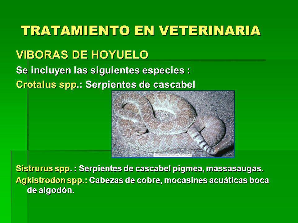 TRATAMIENTO EN VETERINARIA VIBORAS DE HOYUELO Se incluyen las siguientes especies : Crotalus spp.: Serpientes de cascabel Sistrurus spp. : Serpientes