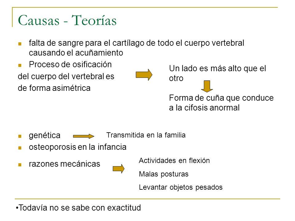 Causas - Teorías falta de sangre para el cartílago de todo el cuerpo vertebral causando el acuñamiento Proceso de osificación del cuerpo del vertebral