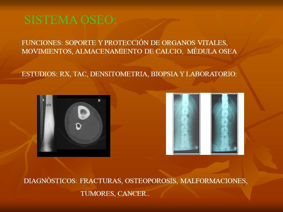 SISTEMA OSEO: FUNCIONES: SOPORTE Y PROTECCIÓN DE ORGANOS VITALES, MOVIMIENTOS, ALMACENAMIENTO DE CALCIO, MÈDULA OSEA ESTUDIOS: RX, TAC, DENSITOMETRIA,