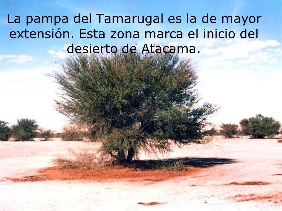 La pampa del Tamarugal es la de mayor extensión. Esta zona marca el inicio del desierto de Atacama.
