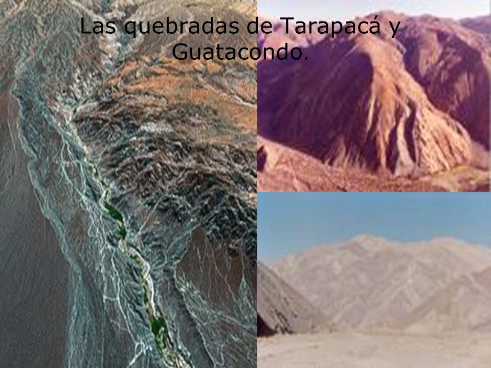 Las quebradas de Tarapacá y Guatacondo.