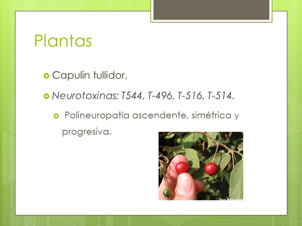 Plantas Capulín tullidor, Neurotoxinas: T544, T-496, T-516, T-514. Polineuropatía ascendente, simétrica y progresiva.